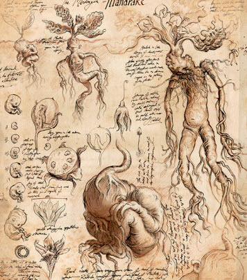 Mandrake drawn by Jim Kay in Harry Potter and the Chamber of Secrets Illustrated Edition